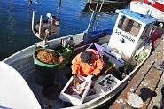 Frischer Fisch direkt vom Kutter